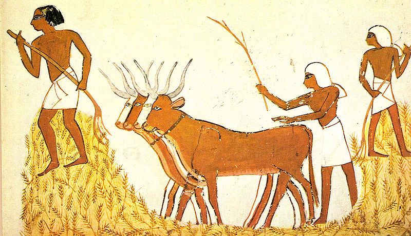 Neolithic Revolution 2