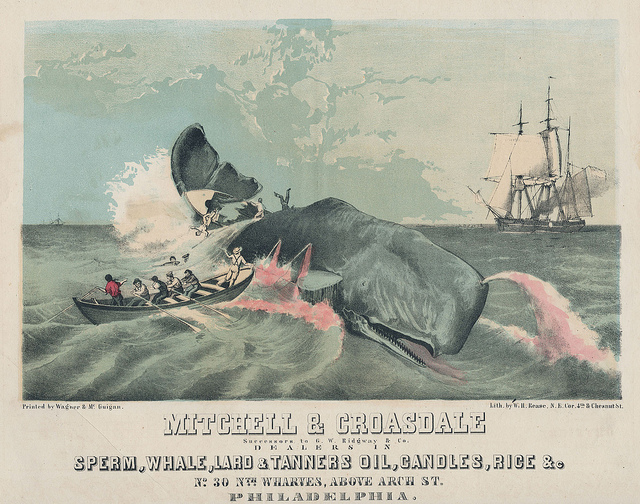 The sperm whale was threatened with extinction in the 1800's, but kerosene oil for lamps cut the market for sperm whale oil.
